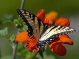 butterflies_and_moths