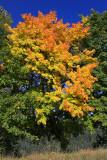 Autumn 2008 (3)