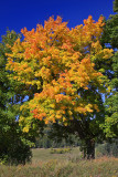 Autumn 2008 (4)
