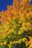 Autumn 2008 (5)