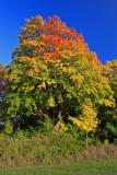 Autumn 2008 (6)