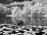 Teich bei Harras