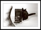 cat_4564.jpg