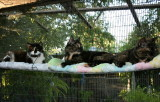 Fur Babies - Kitties III