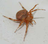 I would like to know the name of this spider...please
