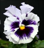 My Favorite Plant and Flower Nursery