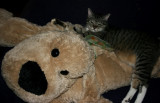 Mr. Minnie and his new friend