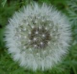 Fairies  favorite seeds...