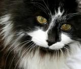 Fur Babies - Kitties II