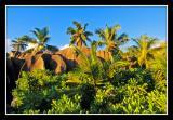 rochers et vegetation