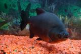 Aibonito - Fish Tank at La Selva