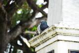 A nest anywhere...
