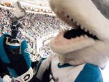 Sharkie is playing with the bobble head