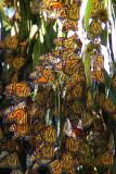 ex monarch cluster cr mod.jpg