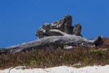 ex big driftwood_MG_9023.jpg