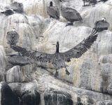ex landing pelican 1.jpg