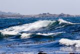 ex blue ocean wave_MG_9062.jpg