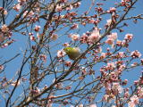This spring by Canon PowerShot S2 IS