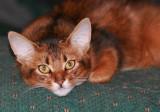 Woofden Kitty Pics