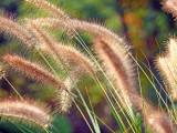 Glorious grasses