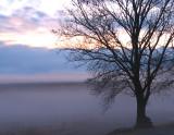 February 2008 PaD