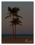 @ the beach