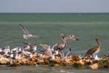 Congregating on a Wind Break