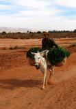 Workin' Donkey