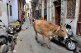 Delhi Backstreets