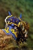 SEA SLUGS (NUDIBRANCHES) & Sea Worms