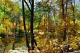 arizona_fall_colors