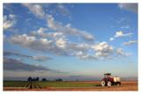Salton Sea Agriculture