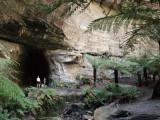 Glow Worm Tunnel 2008