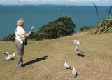 Gull-attracting ritual