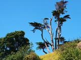 Trees on North Head