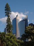 Tall tree, tall buildings
