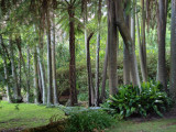 In the grounds of Vaucluse House