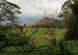 Farmland after a flood