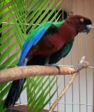 Captive parrot