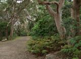 Yenda Fire Trail