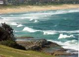 Curl Curl Beach - 1