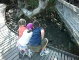 Three small observers of crabs