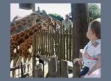 Charlie at the zoo  – 1