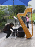 Picture in the Harp.jpg