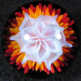 Sun Flower Size: 1.34 Price: SOLD