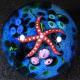 Starfish Trooper Size: 2.10 Price: SOLD