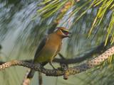 Birds, Deer and Other Local Wildlife