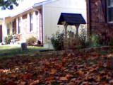 03_frontyard.JPG