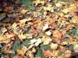 04_leaves.JPG