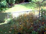 09_flowerbed.JPG